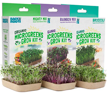 back to the roots microgreen grow at home kit