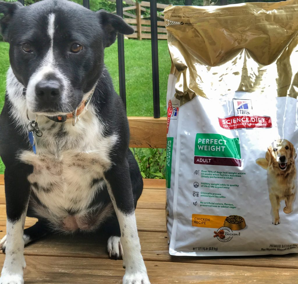 Healthy Pets Need Healthy Food with Hill's Science Diet www.cookwith5kids.com