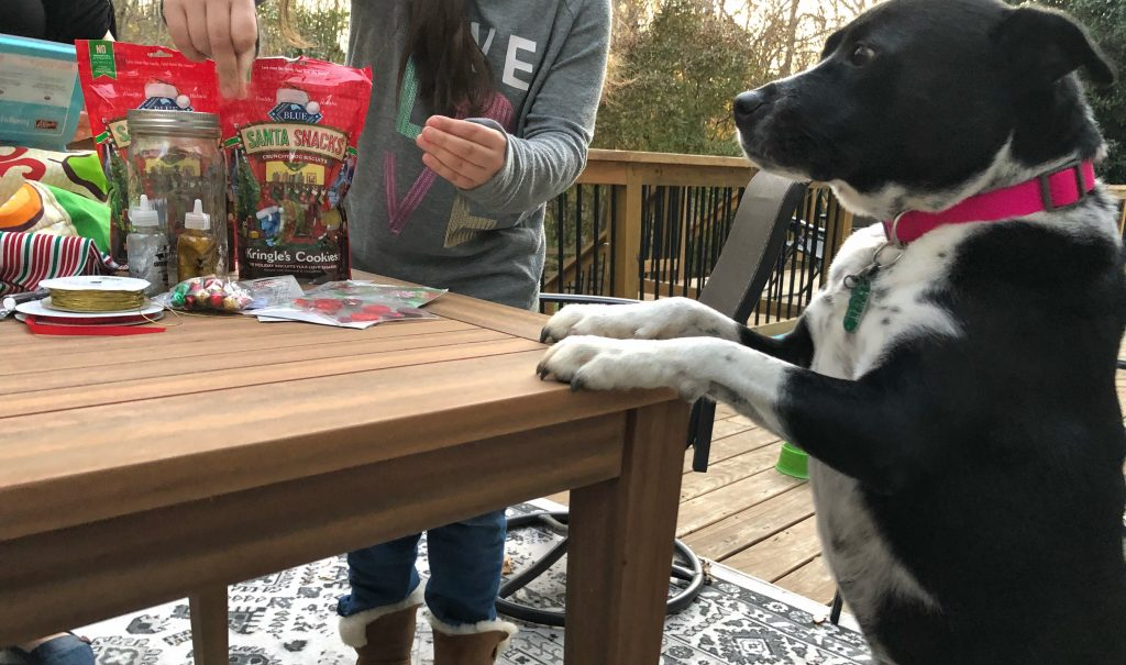Blue buffalo santa snacks are a great holiday treat for dogs