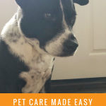 pet care made easier with online ordering at Chewy.com