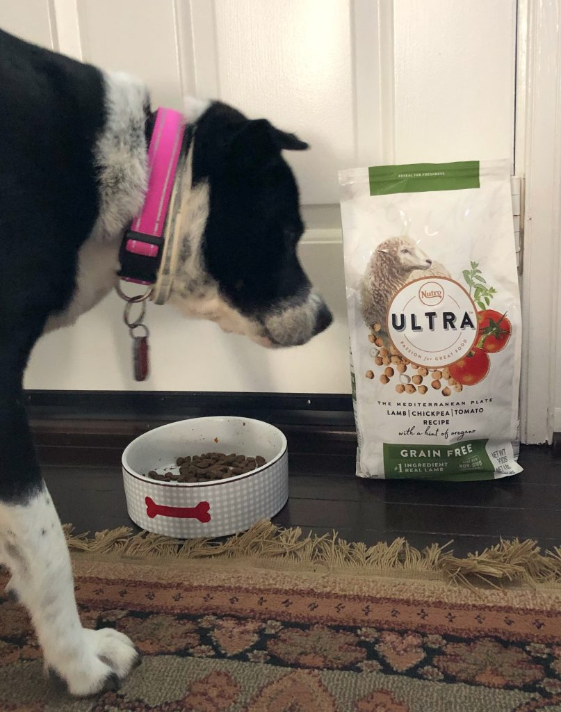 Nutro ultra lamb grain free dog food from Chewy.com