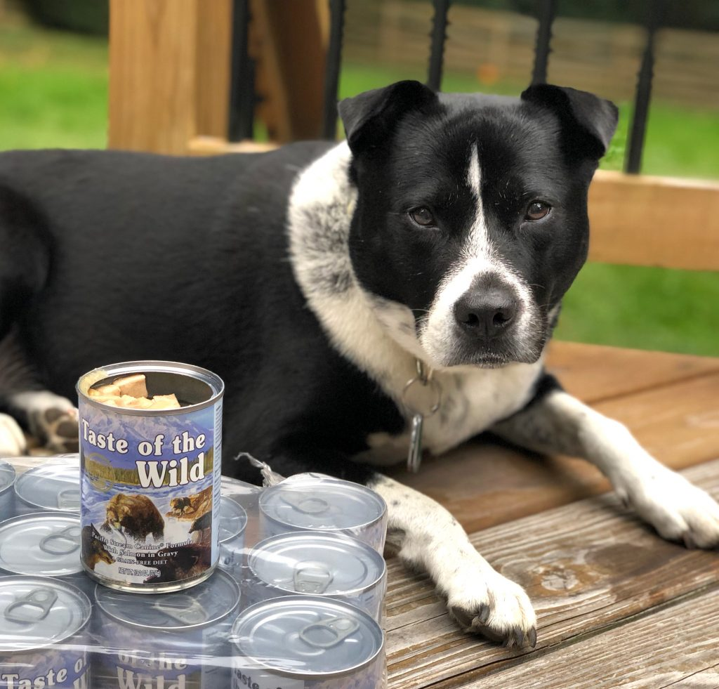Taste of the Wild Salmon in gravy grain free dog food